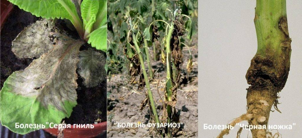 Болезни растений фото