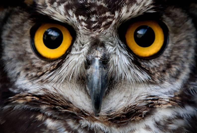 Глаза совы фото