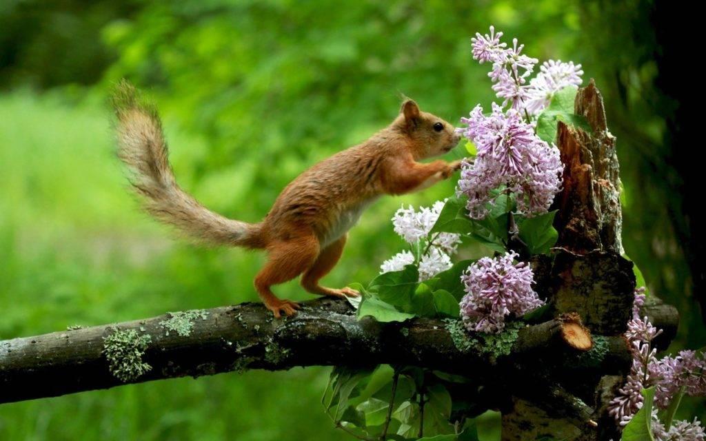 Как белка встречает весну