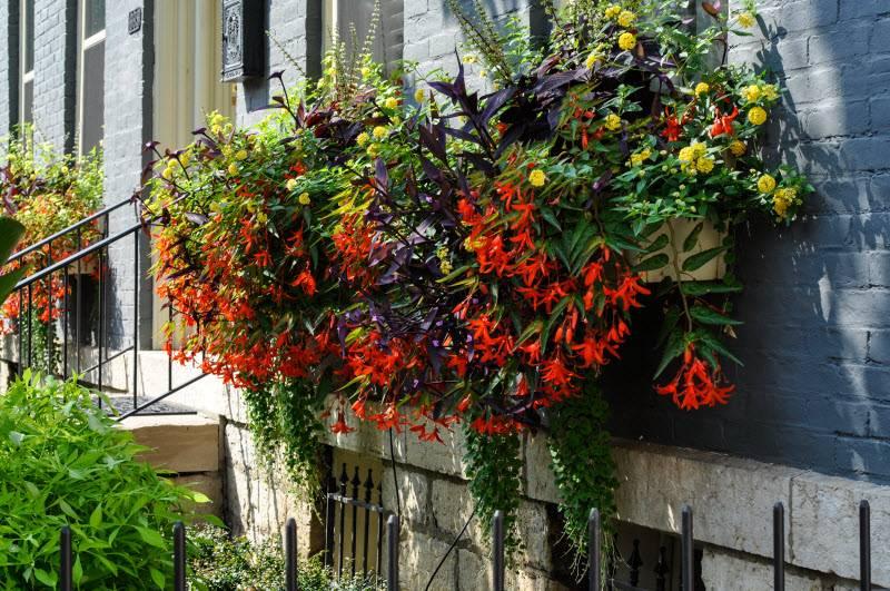 Композиция с бегонией (на фото вид бегонии WATERFALL ENCANTO ORANGE и другие цветы)