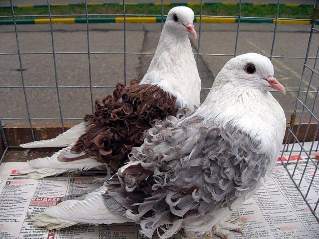 Фото голубей