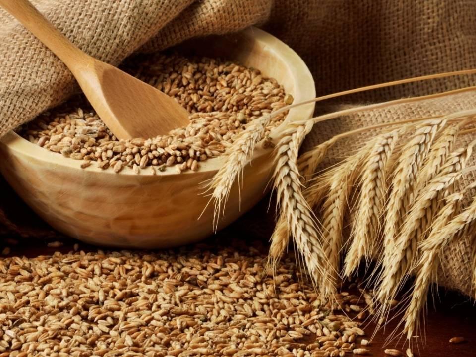 Пшеница зерно фото