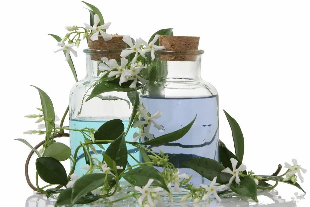 Эфирное масло жасмина свойства
