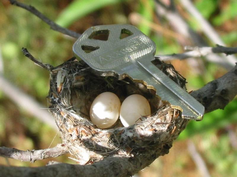 Яйца колибри фото