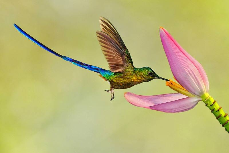Фото колибри птицы