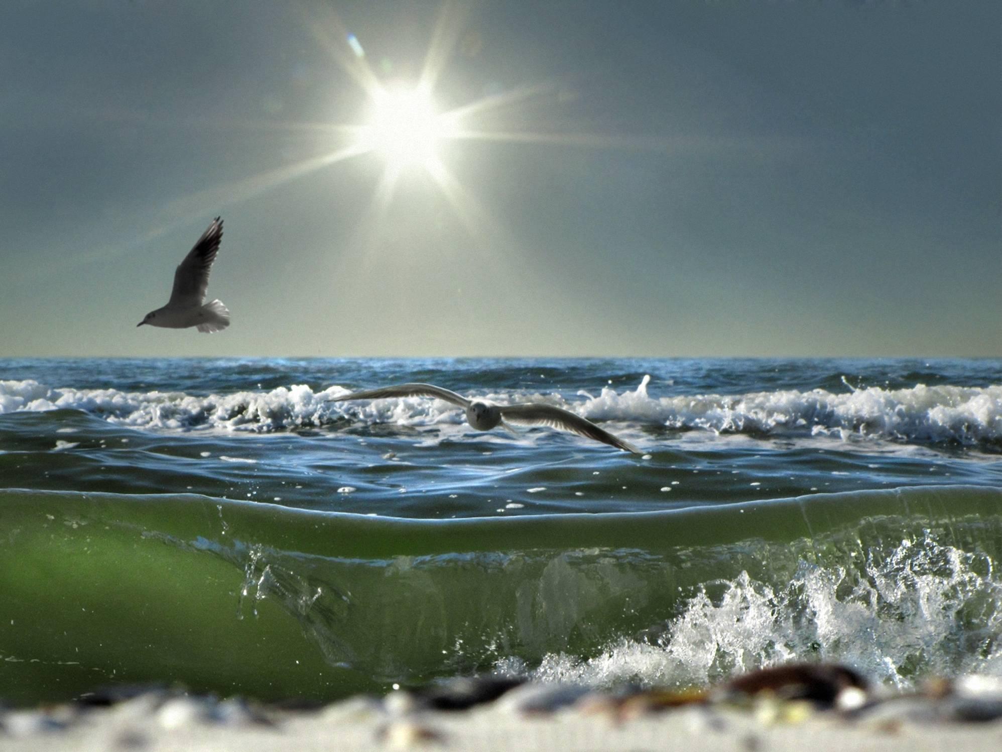 чайка над морской волной фото
