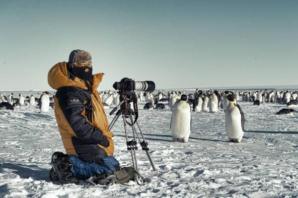 Императорский пингвин и человек фото (лат. Aptenodytes forsteri)