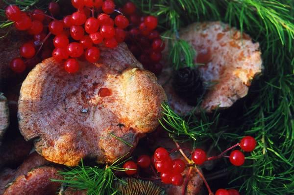 Натюрморт с рыжиками, кедровыми ветками и калиной (лат. Lactarius deliciosus)