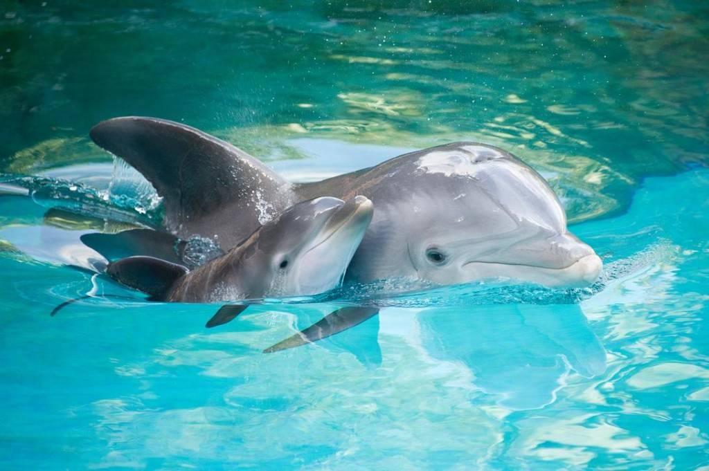 Дельфин и дельфиненок фото
