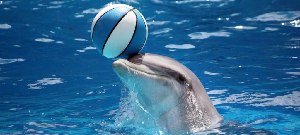 Играющий дельфин фото