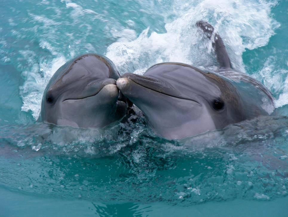 Фото дельфины