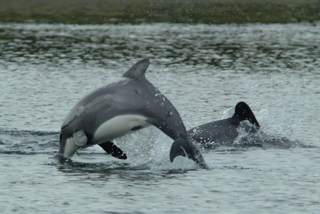виды дельфинов с фото и названием
