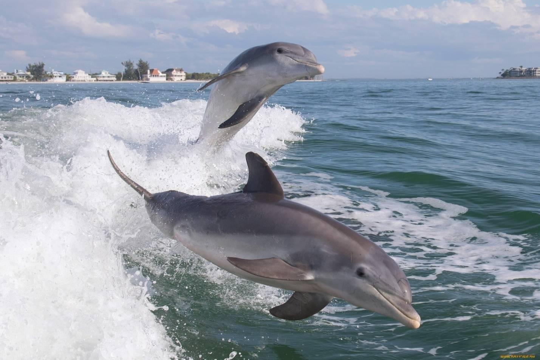 Картинки по запросу дельфины