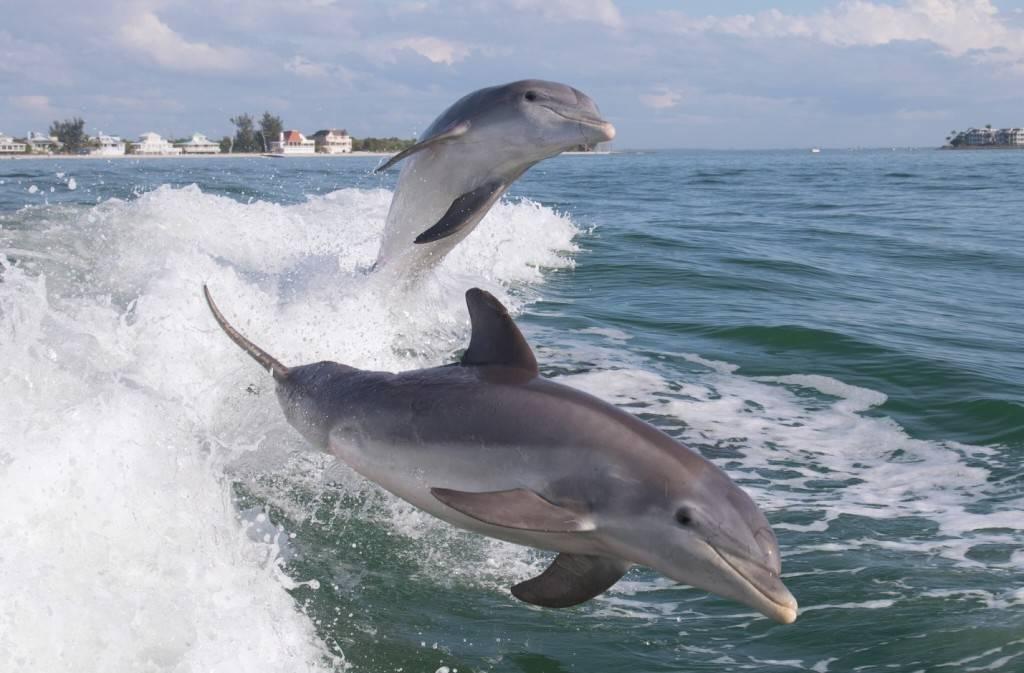 Дельфины в море фото