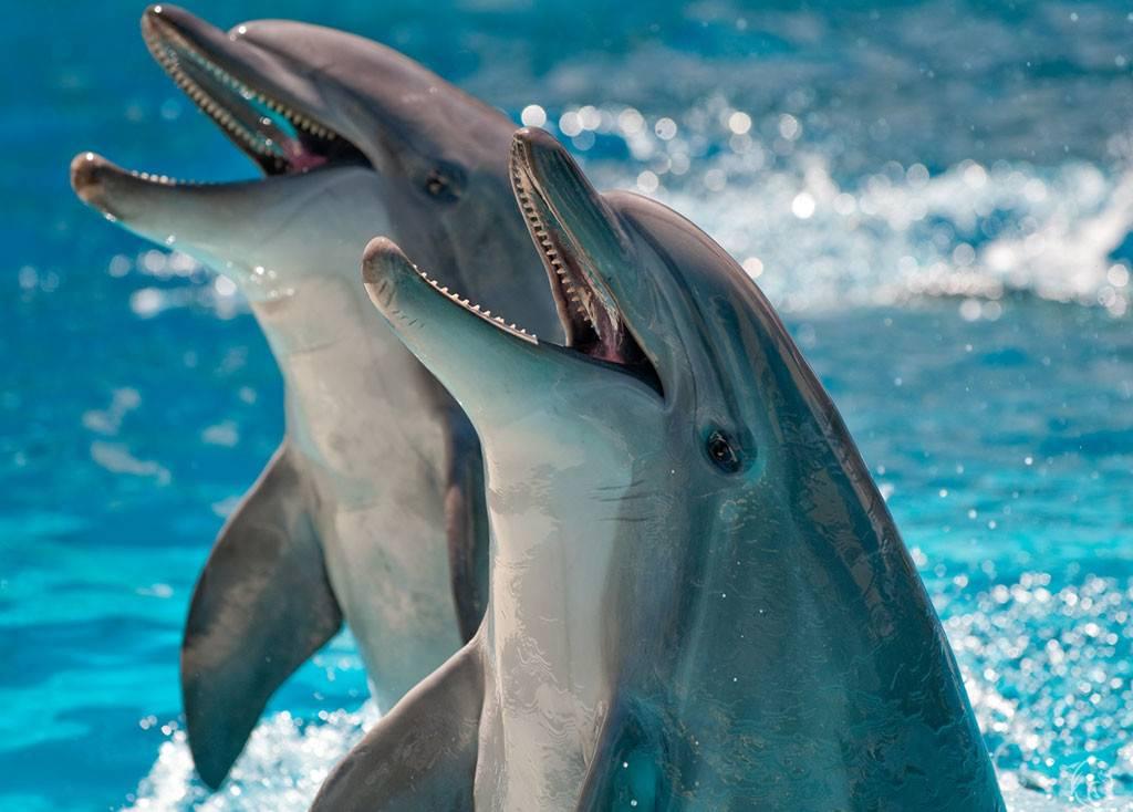 Фото дельлфины в море