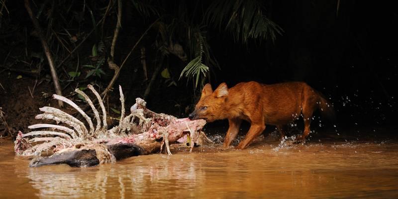 Что едят волки фото