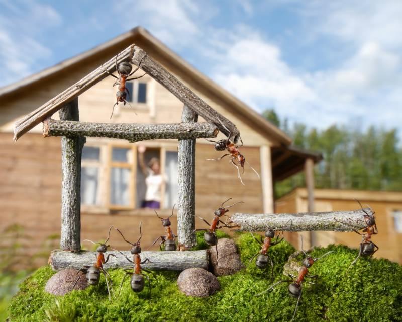 Жизнь муравьев фото