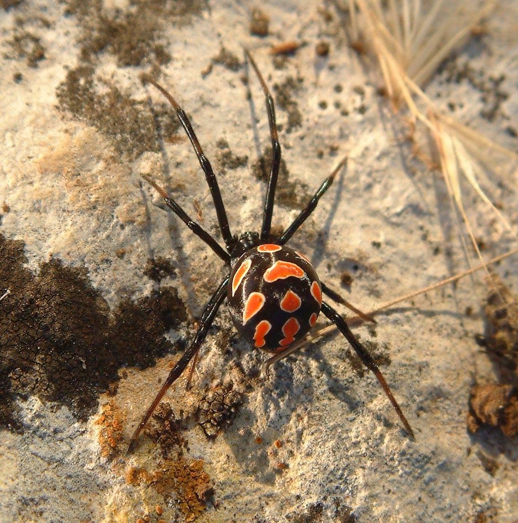 Опасные насекомые россии фото и названия