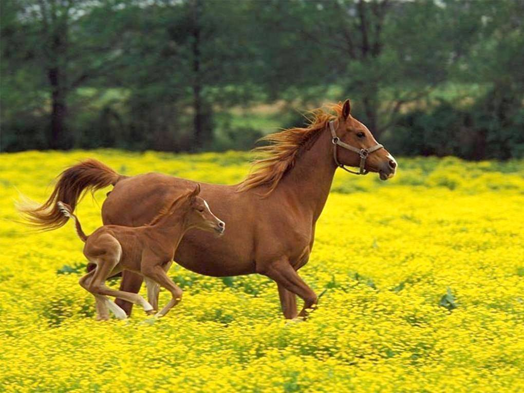 Лошадь и жеребенок фото