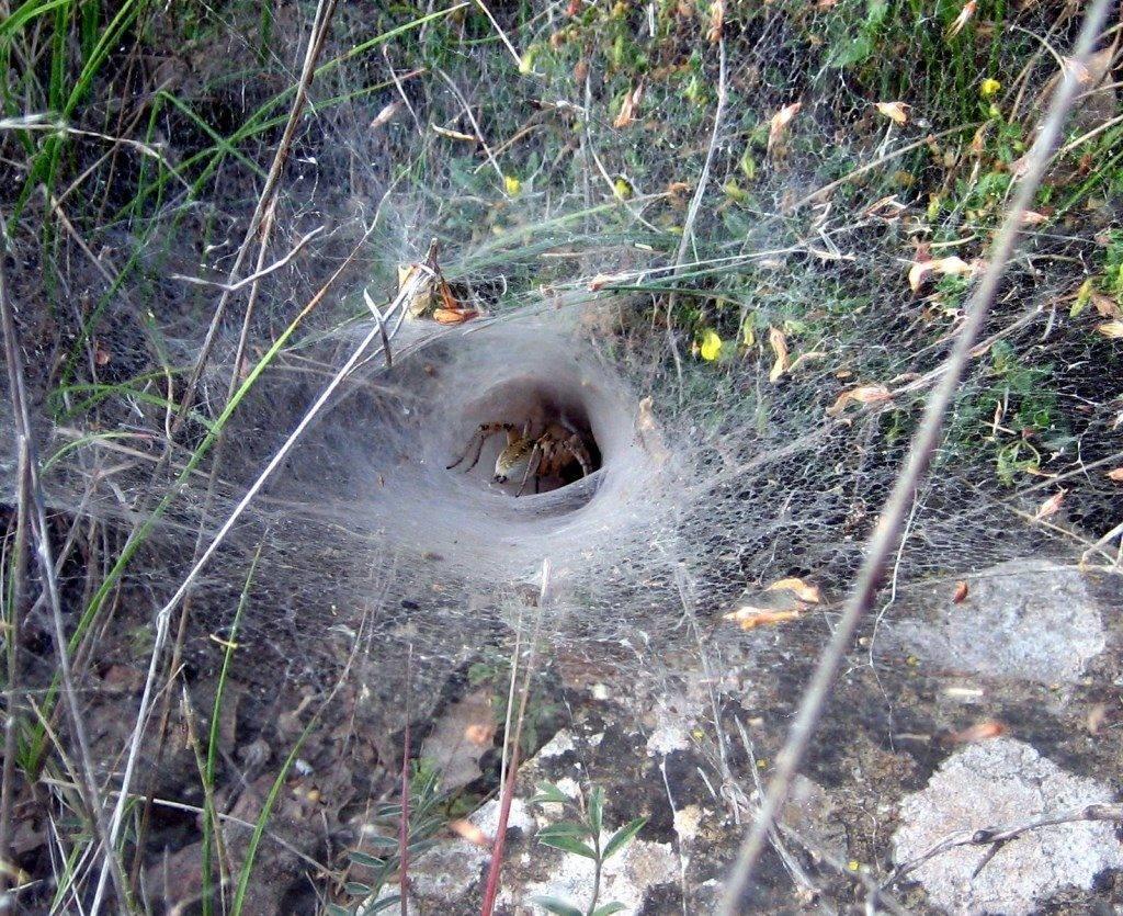 Паутина в виде конуса