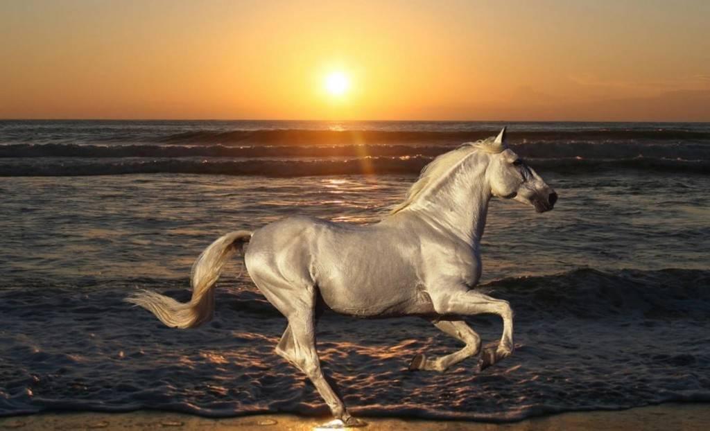 Белая лошадь фото