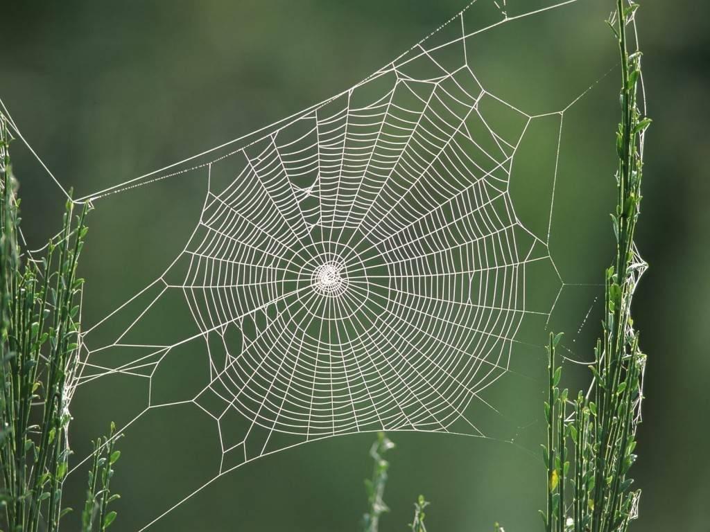 Круглая паутина