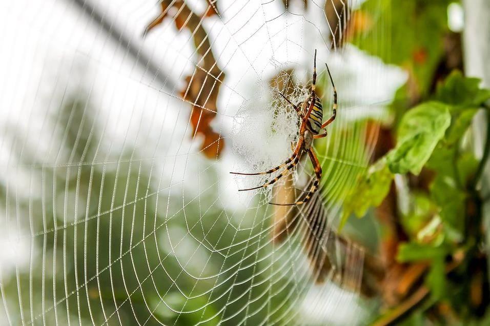 Паук на паутине фото
