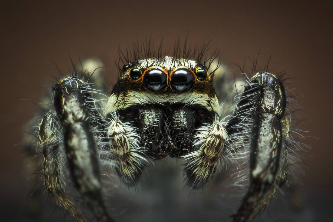 Какие бывают редкие виды пауков