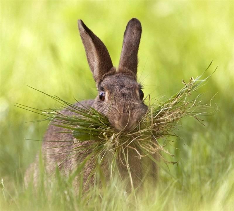 Чем питается заяц