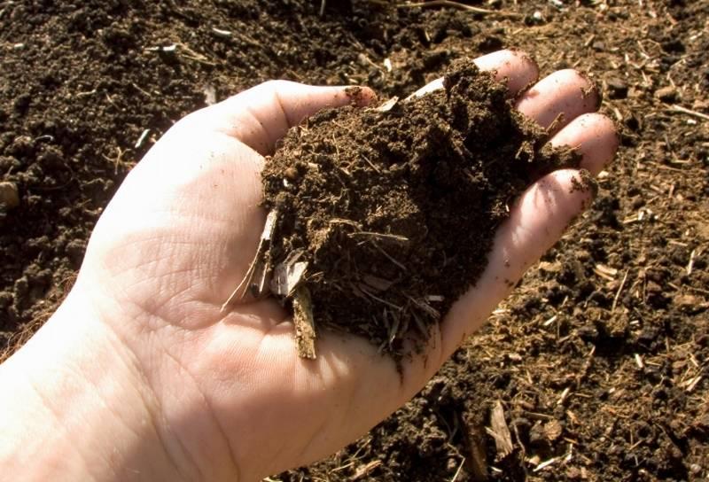 Выращивание шампиньонов в домашних условиях и на даче