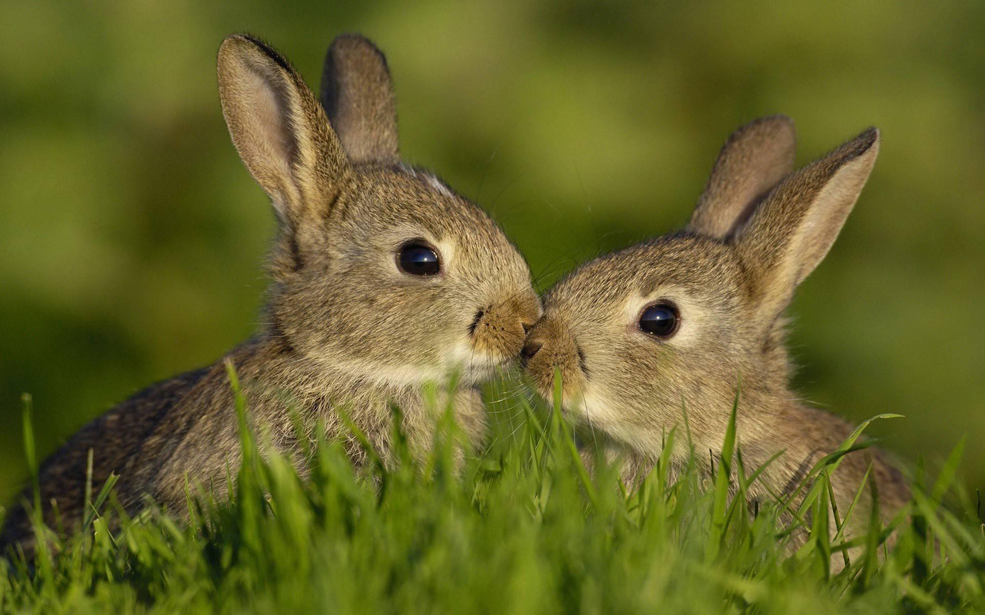 Картинки по запросу зайцы