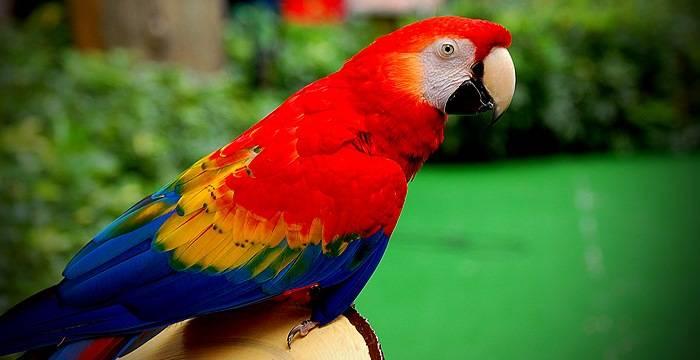 Картинки по запросу попугай фото