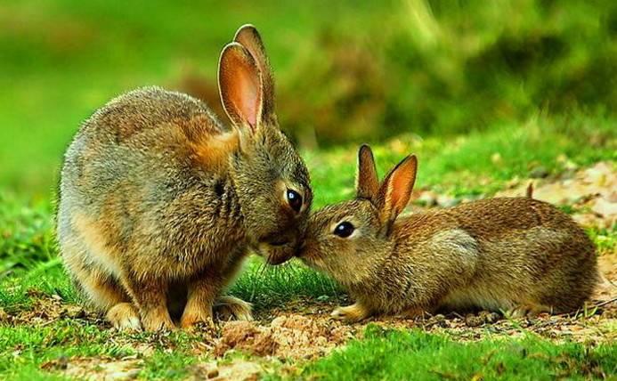 Картинки зайцев и зайчиха