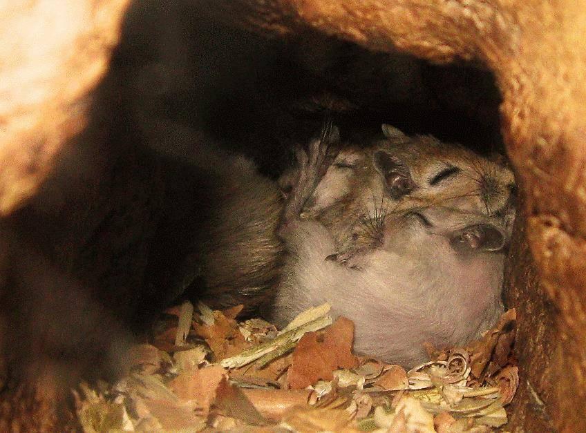 Нора мыши фото