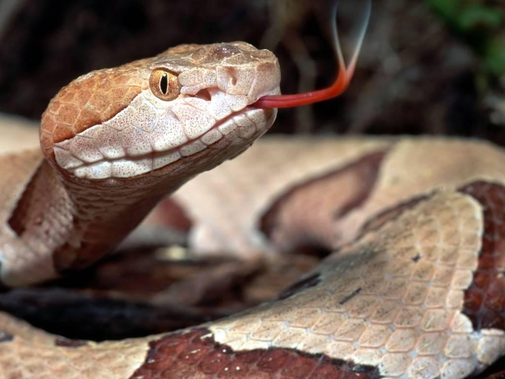 Змея фото