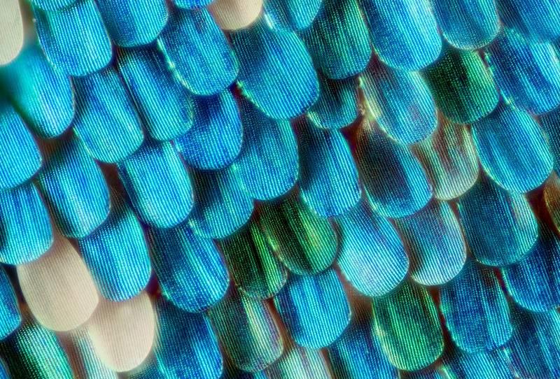Крылья бабочки - макросъемка
