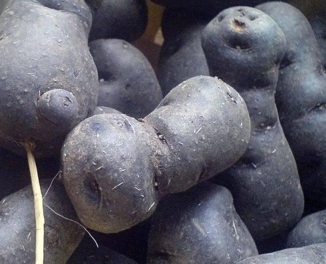Сорт картофеля Виталот (Вителотте)