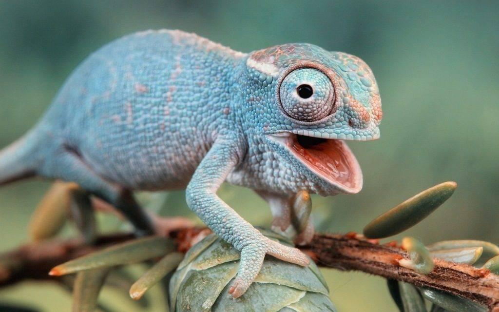 Какие бывают ящерицы в мире фото