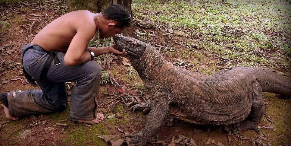 Самая большая ящерица в мире – Комодский варан