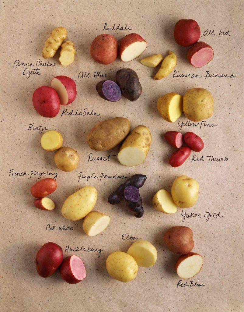 Сладкий перуанский картофель – сорта и фото
