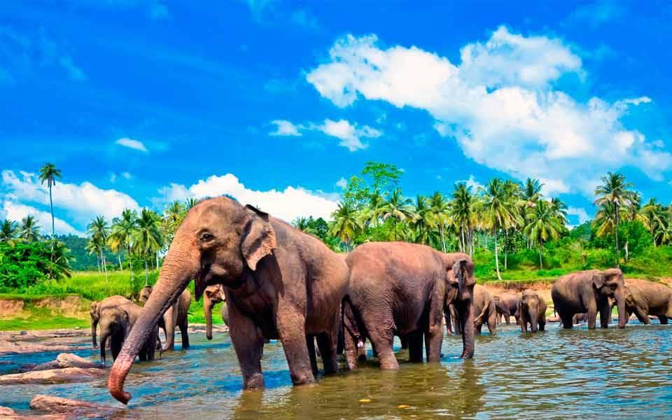 Слоны в природе
