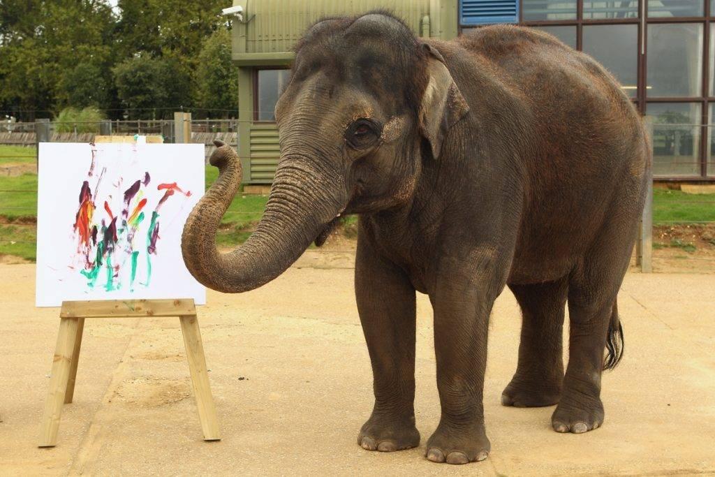 Слон рисует картины