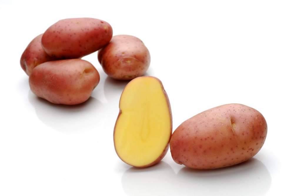 Сорт картофеля Ароза