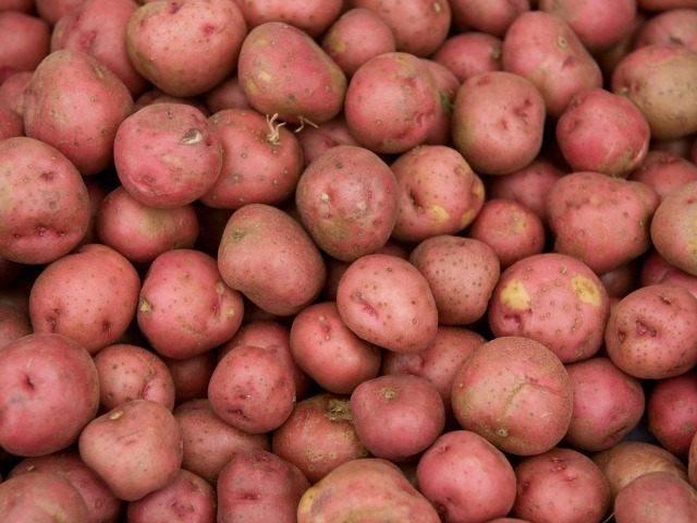 Сорт картофеля Вольтман