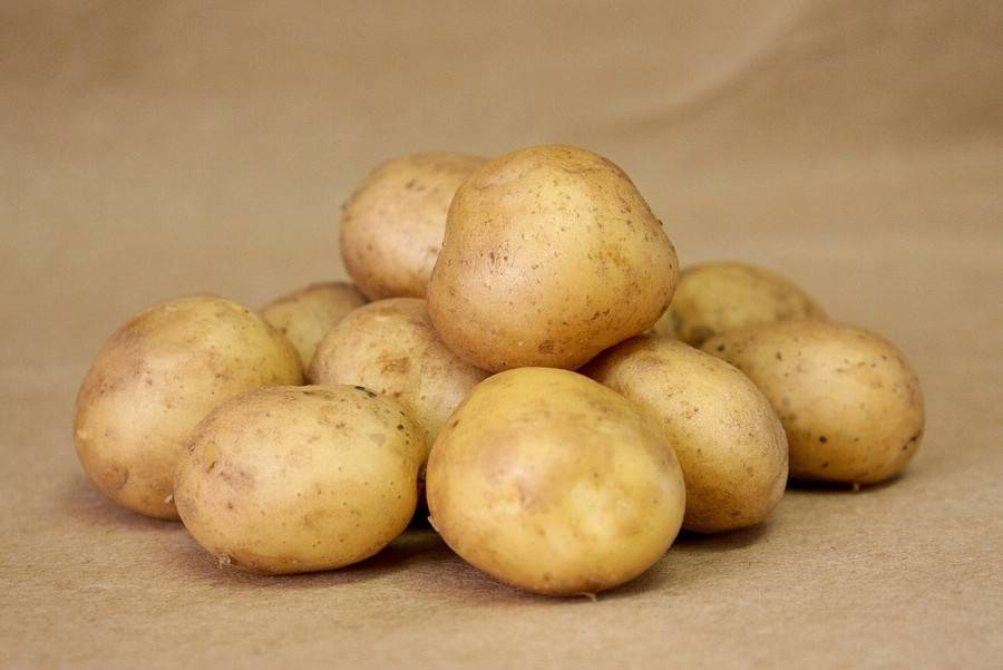 Сорт картофеля Выток