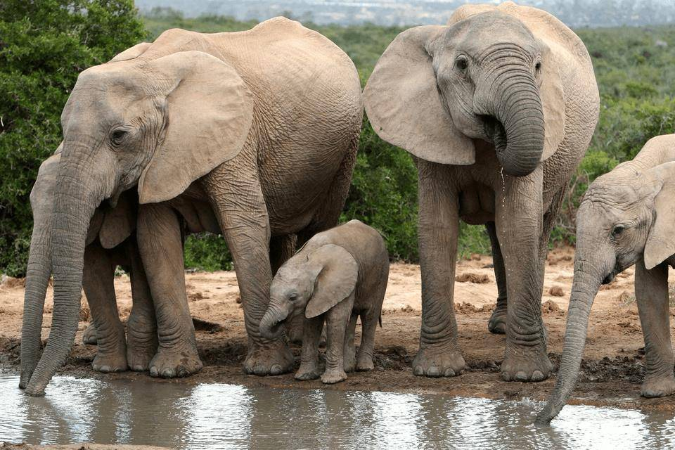 Картинки по запросу слоны