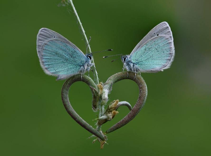 Фото красивых бабочек