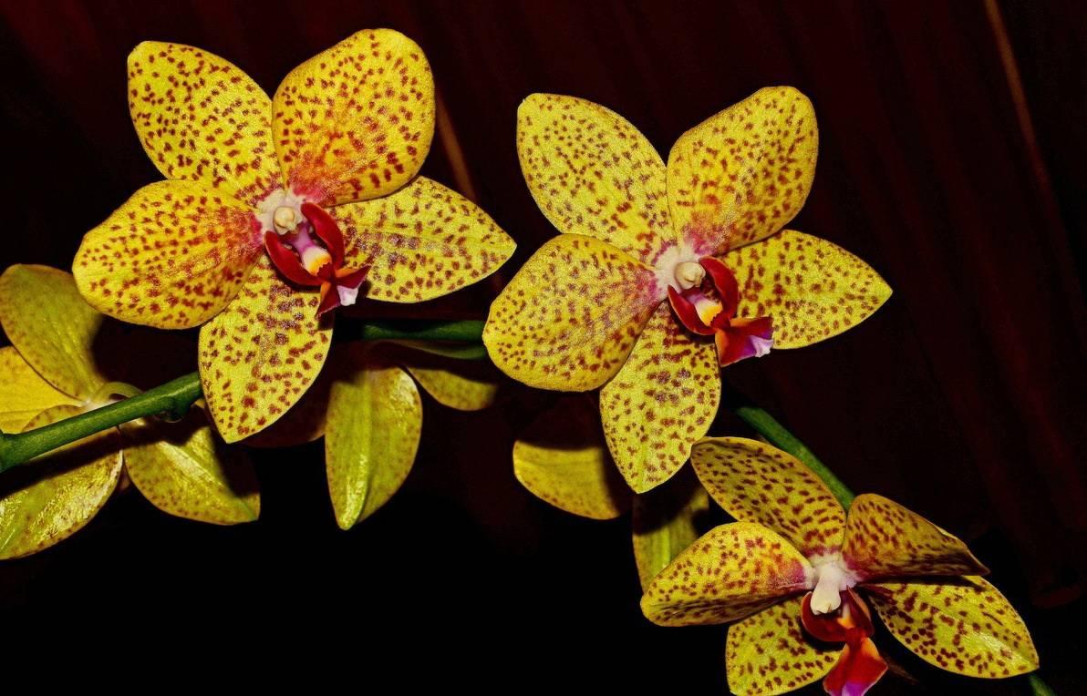 соседях, ученые, золотая орхидея цветок фото понимаю, зачем
