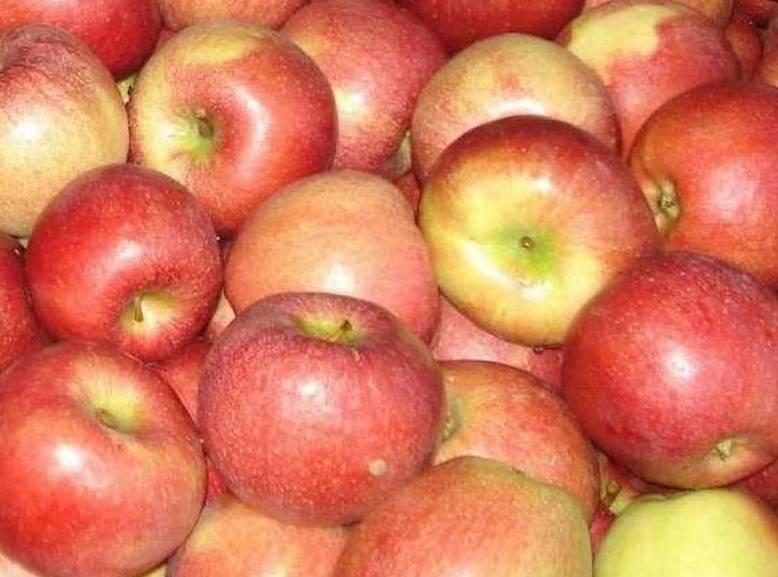 Кисло-сладкий сорт яблок Милтош