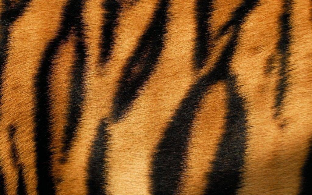 Мех тигра
